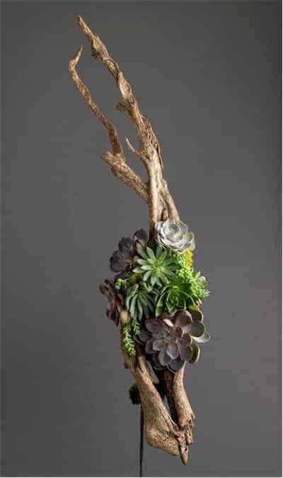当枯木遇上多肉植物 - 小石頭 - 我明白你会来,所以我等