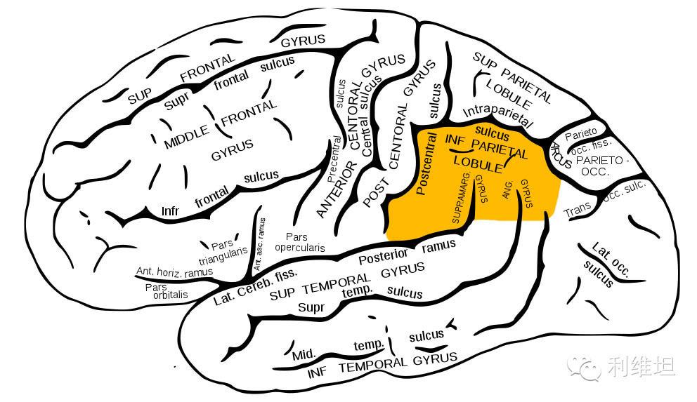 男人和女人大脑真的有什么不同吗? 搜狐