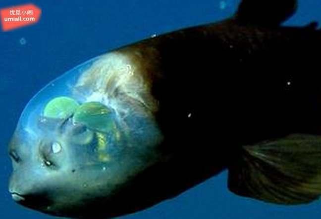 16种海底深处发现的神奇海洋生物图片