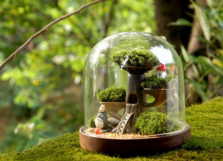 本周六 来昌建广场DIY苔藓微景观吧
