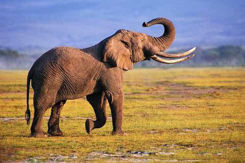 探索自然界最臭的动物