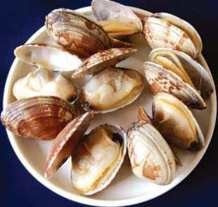 动物 海底 海鲜 美食 软体 310_294