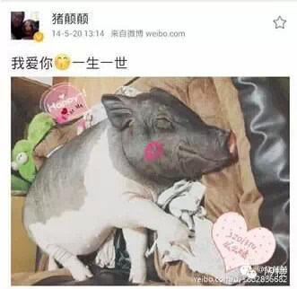 两只猪抱着睡觉的照片