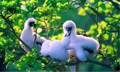 群岛的第一大岛永兴岛,如一座热带植物园.