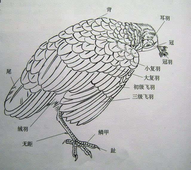 翅膀画法手绘图片