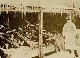 731病毒:给日本美女传染美军性病接种屁股!,部队耳朵小小性感的图片