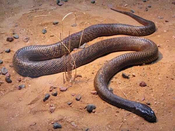 世界上最致命的10种带毒动物