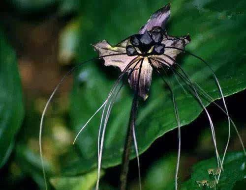世界上最神奇的植物_世界上最神奇的植物是什么有趣的植物有哪些 方法