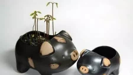 第三步:绑在树枝上,插入花瓶中