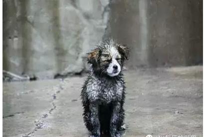 遮风挡雨的动物