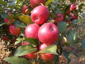 大连90后女神老师卖水果,年赚1000万的3个方