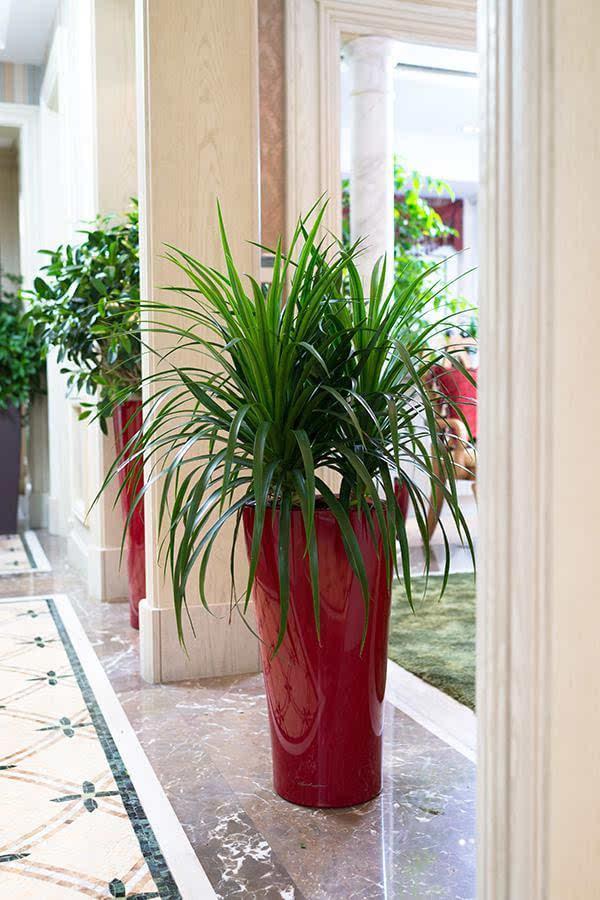 室内仿真植物树