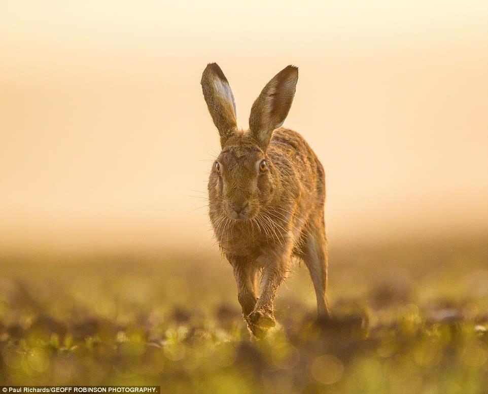 [英国] 太美了!野生动物摄影大赛获奖作品