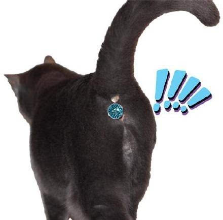 壁纸 动物 猫 猫咪 小猫 桌面 440_433