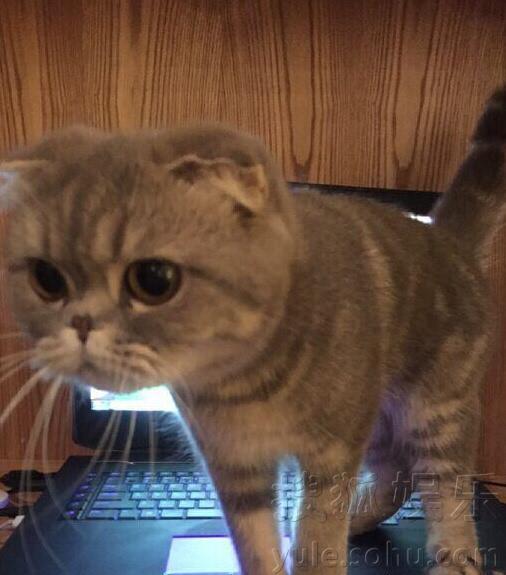 猫和各种动物的合照