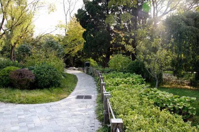 约不约 | 中山公园赏菊全攻略,走起!