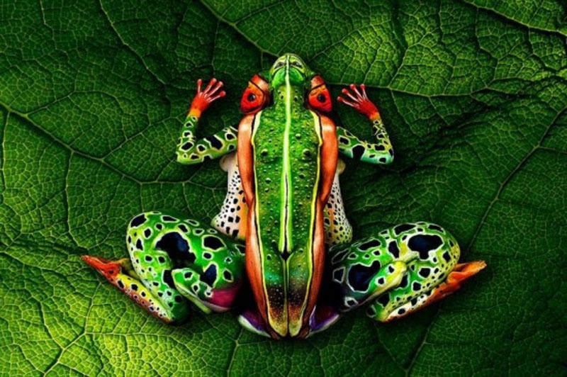 2013年,意大利人体彩绘艺术家曾用5名模特创造逼真的树蛙.