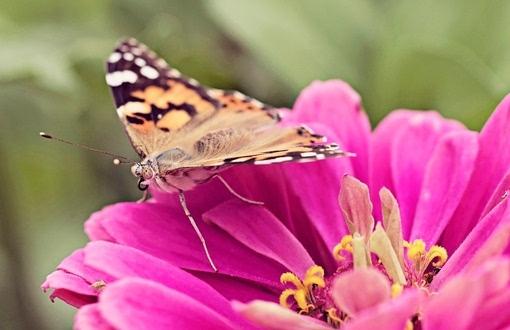 唯美小清新森系蝴蝶伤感花朵清新美图