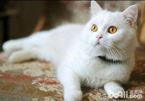 猫得了螨虫皮肤病图片图片