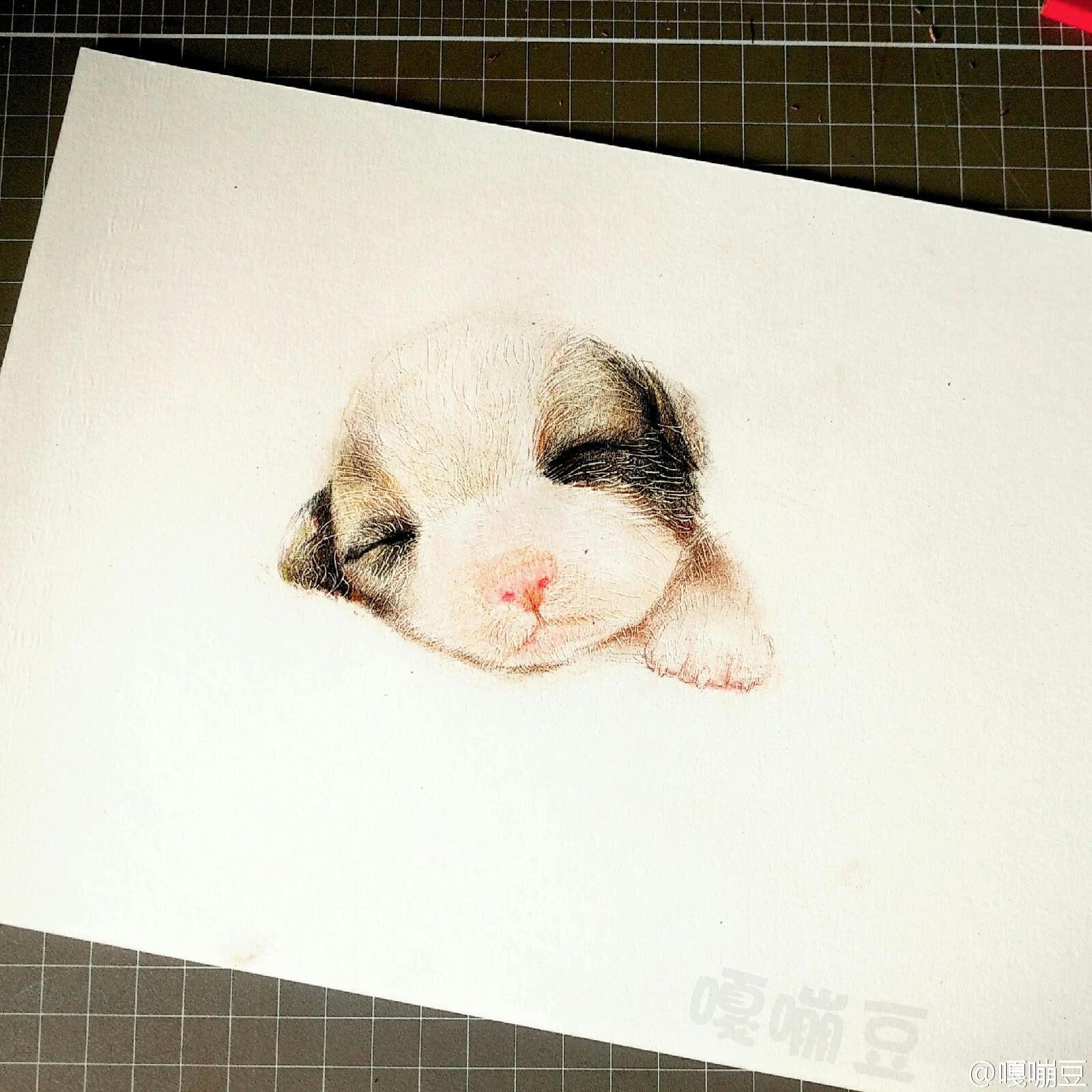 9张手绘彩铅狗狗插画