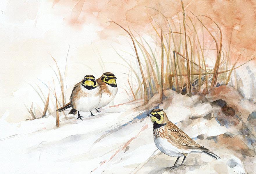 生物学家的鸟类水彩画作品