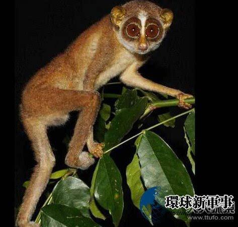 世界上最稀有的动物 你知道几种呢