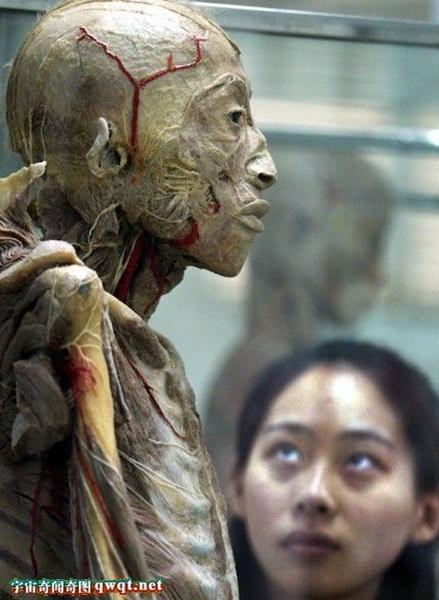 尸体解剖_恐怖揭秘大连尸体加工厂:解剖尸体脱水制作全过程
