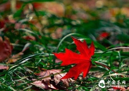倾听,一叶知秋的美丽 - 清 雅 - 清     雅博客