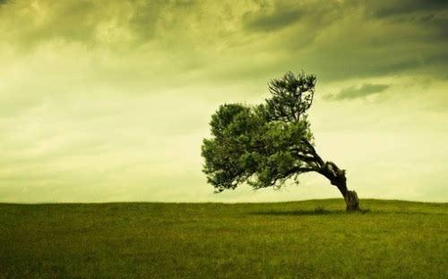 从一棵落地生根的小树开始
