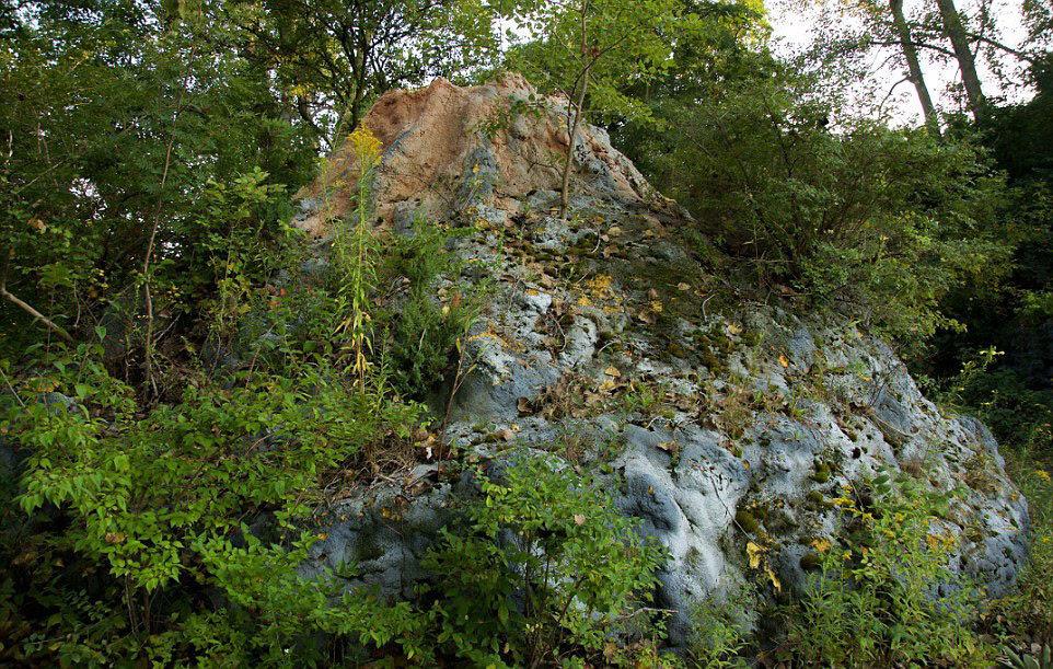 走进现实版侏罗纪公园:人造恐龙潜伏幽暗森林图片
