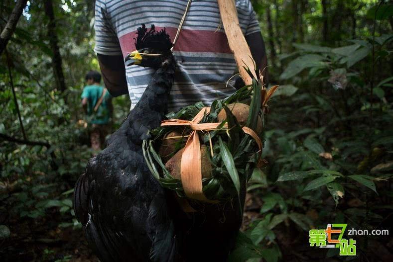探秘:巴西热带雨林最后的伊甸园