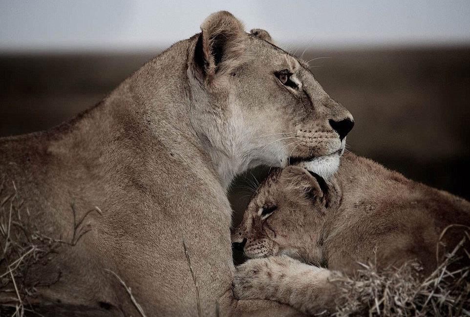 英国摄影师记录非洲野生动物生存惨境
