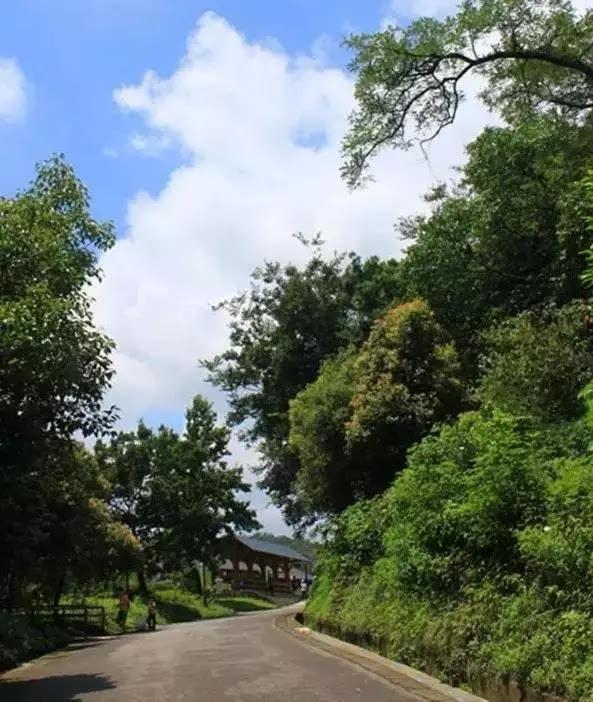 老山森林公园图片
