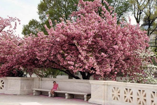 世界上最漂亮的20张树木摄影照片