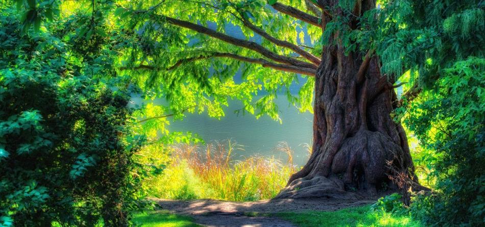 自然 风景 春天 绿色 树木 森林 风景 小路 桌面壁