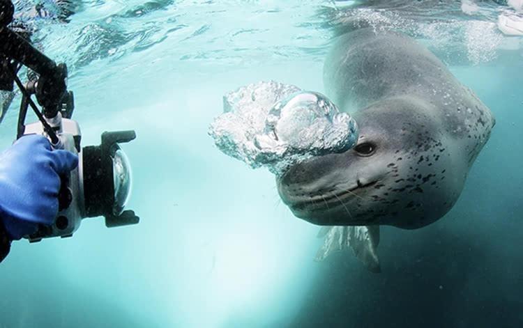 走进大动物的世界 专访著名摄影师amos nachoum