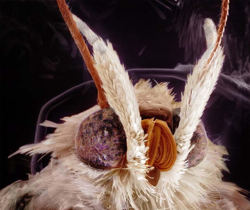 隐翅虫咬人后症状擦什么药膏 被咬后应该怎么治疗_YY粉丝网