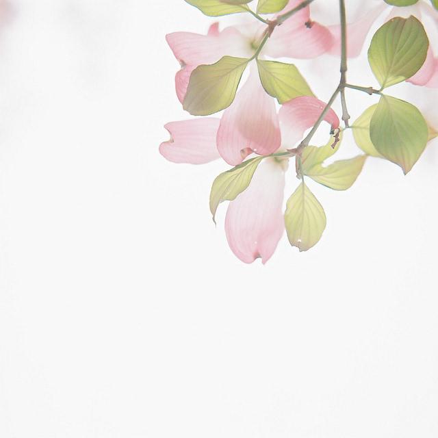 小清新森系植物伤感绿色意境图片