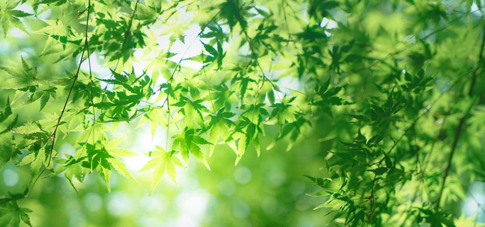树叶 绿色 护眼 清新 叶子 阳光 安静 桌面壁纸