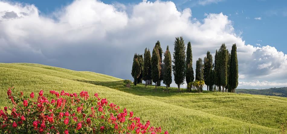 花场树花蓝天白云 草地 夏天的风景图片 桌面壁纸