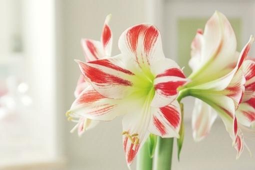 唯美意境伤感森系植物小清新图片图片