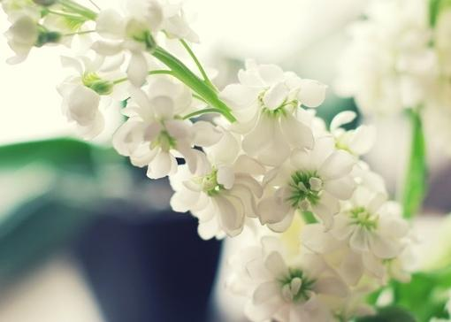 唯美意境伤感森系植物小清新图片