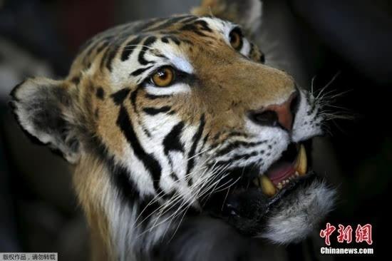探秘非洲合法狩猎 多种珍稀动物被制成标本