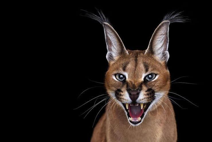 15张珍稀野生动物的照片