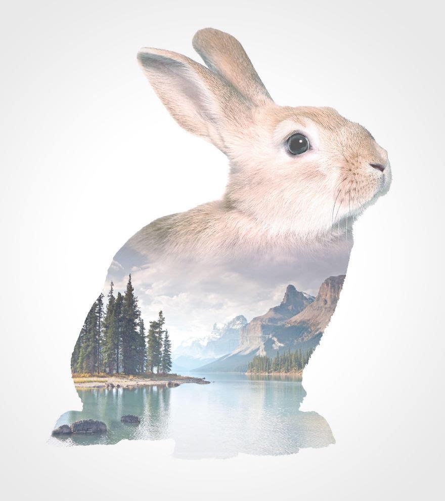 动物风景双重曝光作品欣赏