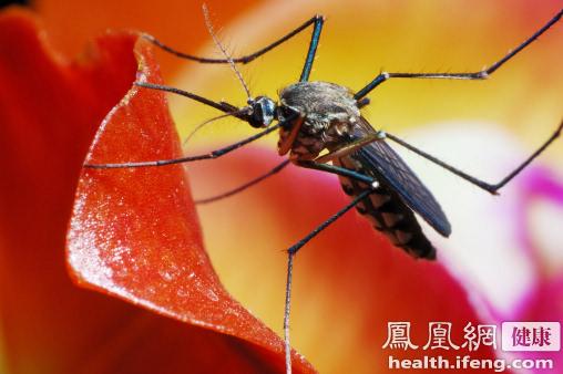 只要家里放一物夏天绝没蚊子图 - 阿拉王子 - yanyuntao7的博客
