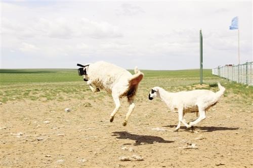 灵歌 十二寻羊 歌谱