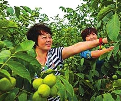 天水/8月12日,记者来到天水市清水县西灵山5万亩现代农业观光旅游...
