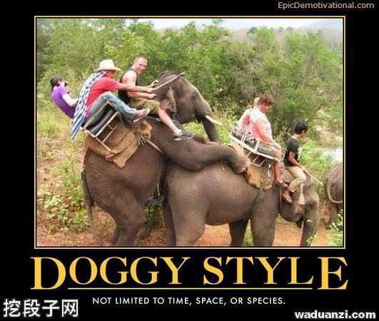 虽然后背式又叫作狗背式,但其实很多动物(不只是狗)都会用这个姿势