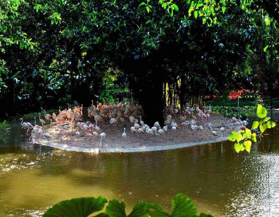 广州长隆野生动物园行之火烈鸟的天堂